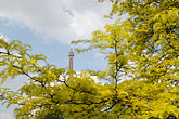 landmark stock photography | France, Paris, Eiffel Tower with trees and blossoms, image id 6-450-269