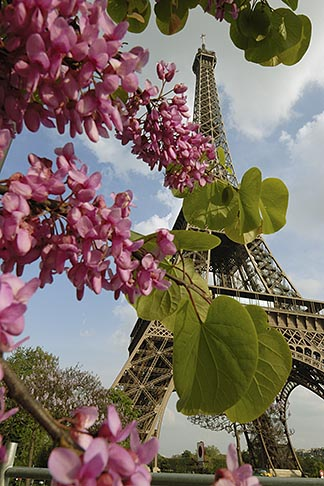 image 6-450-306 France, Paris, Eiffel Tower and blossoms