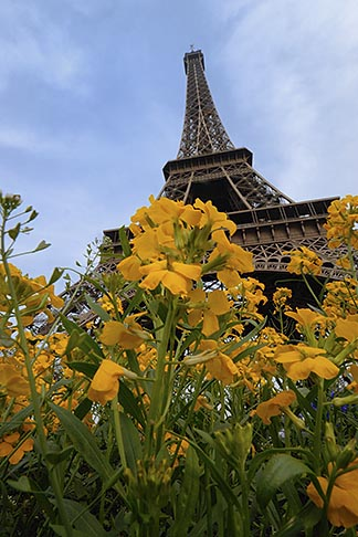 image 6-450-375 France, Paris, Eiffel Tower with flowers in the foreground
