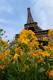 yellow stock photography | France, Paris, Eiffel Tower with flowers in the foreground, image id 6-450-375