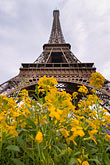 cloudy stock photography | France, Paris, Eiffel Tower with flowers in the foreground, image id 6-450-377