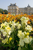 yellow stock photography | France, Paris, Jardins des Luxembourg, Luxembourg Gardens, image id 6-450-6219