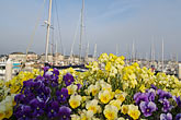 harbor and boats stock photography | France, Normandy, St. Vaast La Hougue, Harbor boats and flowers, image id 6-450-6555