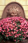 pink flowers stock photography | Germany, Frankfurt, Garden, Zum Gemalten Haus tavern, Sachsenhausen, image id 5-548-10