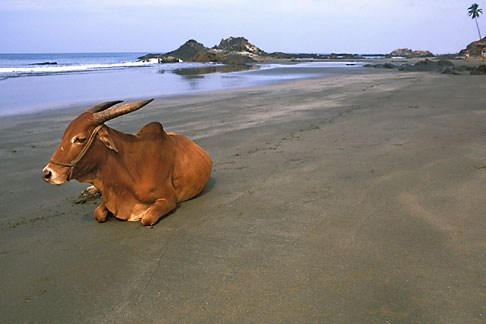 image 0-605-52 India, Goa, Vagator Beach