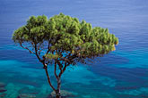 blue stock photography | Greece, Attica, Vouliagmeni, Pine tree, image id 3-670-2