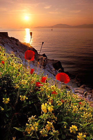 image 3-700-77 Greece, Hydra, Wildflowers on the coast