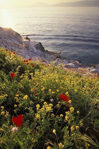 image 3-700-83 Greece, Hydra, Wildflowers on the coast