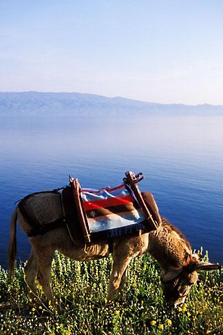image 3-701-99 Greece, Hydra, Donkey, standard transport on the island