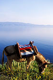 getaway stock photography | Greece, Hydra, Donkey, standard transport on the island, image id 3-701-99