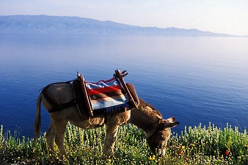 image 3-702-2 Greece, Hydra, Donkey, standard transport on the island