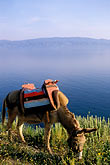 side view stock photography | Greece, Hydra, Donkey, standard transport on the island, image id 3-702-3