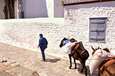 domestic animal stock photography | Greece, Hydra, Man with donkeys, image id 3-702-45