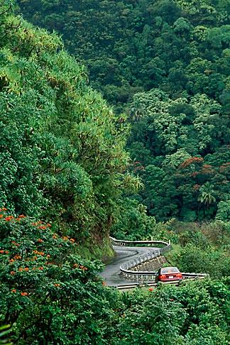 image 4-36-9 Hawaii, Maui, Rainforest and winding road along Hana Highway
