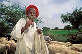 facial hair stock photography | India, Rajasthan, Shepherd with sheep, image id 7-354-7