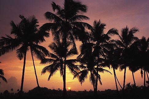 image 7-55-4 India, Kerala, Sunrise, coastal backwaters