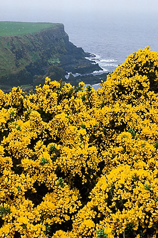 image 4-751-92 Ireland, County Antrim, North Antrim Cliff Path at Giants Causeway