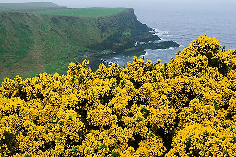 image 4-751-97 Ireland, County Antrim, North Antrim Cliff Path at Giants Causeway