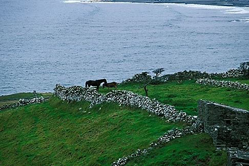 image 4-752-41 Ireland, County Clare, Doolin, Farm by the sea