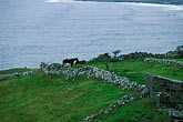 cloudy stock photography | Ireland, County Clare, Doolin, Farm by the sea, image id 4-752-41
