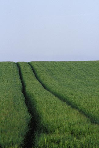 image 4-753-46 Ireland, County Louth, Green field with tracks