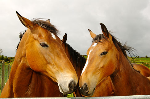 image 4-900-1235 Ireland, County Cork, Horses