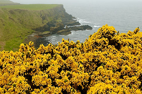 image 4-900-660 Ireland, County Antrim, North Antrim Cliff Path at Giants Causeway