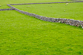 uncomplicated stock photography | Ireland, County Galway, Sheep in field with stone walls, image id 4-900-868