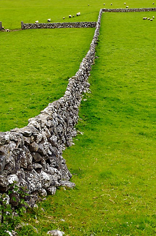 image 4-900-872 Ireland, County Galway, Sheep in field with stone walls