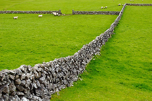 image 4-900-874 Ireland, County Galway, Sheep in field with stone walls