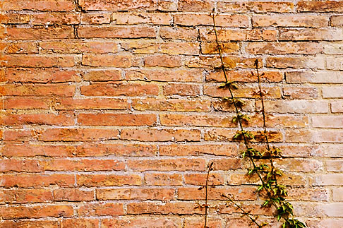 image S4-500-3807 Italy, Rome, wall with ivy