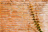 plain stock photography | Italy, Rome, wall with ivy, image id S4-500-3807