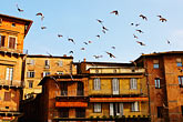 pigeon stock photography | Italy, SIena, Buildings, Il Campo, image id S4-520-7520