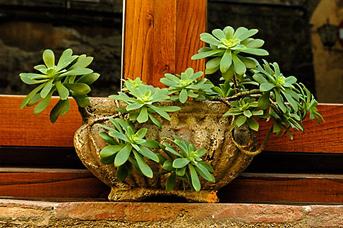 image S4-521-7871 Italy, Siena, Potted plant in window