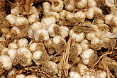 cook stock photography | Italy, Siena, Garlic, image id S4-522-8156