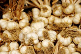 cook stock photography | Italy, SIena, Garlic, image id S4-522-8157