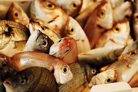 image S4-522-8187 Italy, Siena, Fish