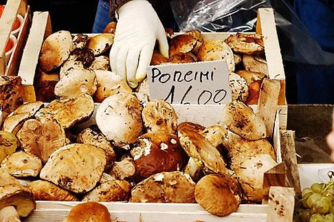 image S4-522-8191 Italy, Siena, Porcini Mushrooms