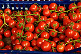 for sale stock photography | Italy, San Gimignano, Tomatoes, image id S4-528-8655