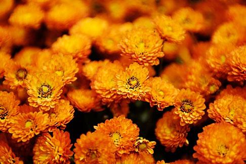 image S4-528-8662 Italy, San Gimignano, Flowers