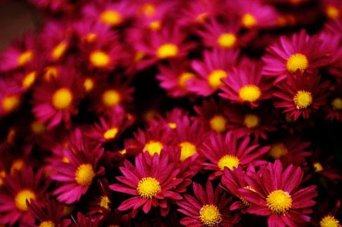 image S4-528-8666 Italy, San Gimignano, Flowers