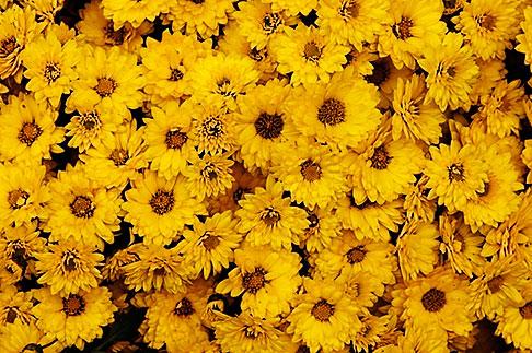 image S4-528-8679 Italy, San Gimignano, Flowers