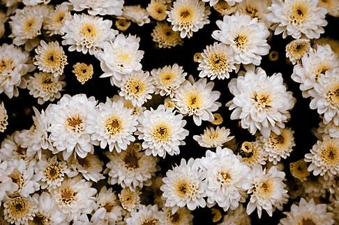 image S4-528-8807 Italy, San Gimignano, Flowers