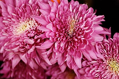 image S4-528-8808 Italy, San Gimignano, Flowers