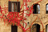 history stock photography | Italy, San Gimignano, Ivy covered wall, image id S4-528-8814