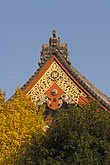 roof decoration stock photography | Japan, Tokyo, Asakusa Kannon Temple, image id 5-850-2014