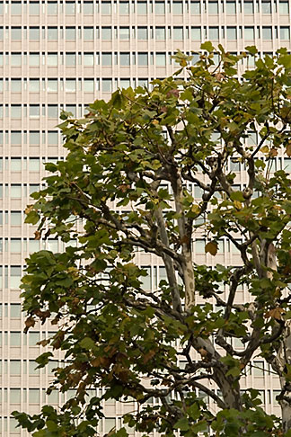 image 5-850-2774 Japan, Tokyo, Tree and office building, Marunouchi