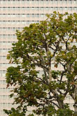 vertical stock photography | Japan, Tokyo, Tree and office building, Marunouchi, image id 5-850-2774