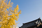 yellow stock photography | Japan, Kyoto, Konkai Kumyoji Temple, image id 5-855-2178