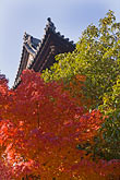 red leaves stock photography | Japan, Kyoto, Konkai Kumyoji Temple roof, image id 5-855-2393